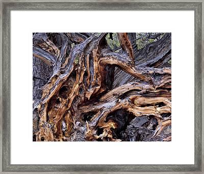 Limber Pine Roots Framed Print by Leland D Howard