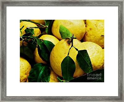 Limoni Framed Print by Anne McDonald