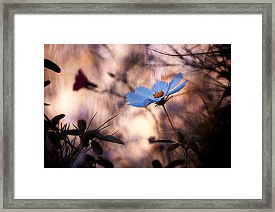 L'indiff�rence Framed Print by Fabien Bravin