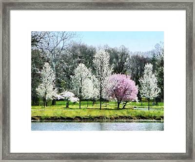 Line Of Flowering Trees Framed Print by Susan Savad