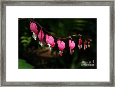 Line Of Hearts Framed Print by Steve Augustin