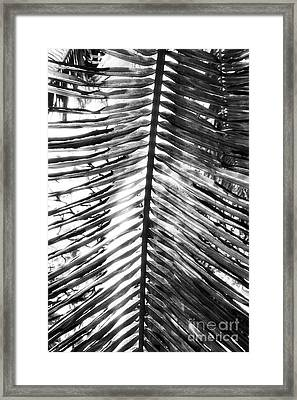 Lines Framed Print by John Rizzuto