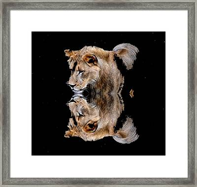 Lion And It's Reflection Framed Print by Anand Swaroop Manchiraju