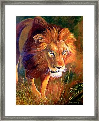 Lion At Sunset Framed Print by Michael Durst
