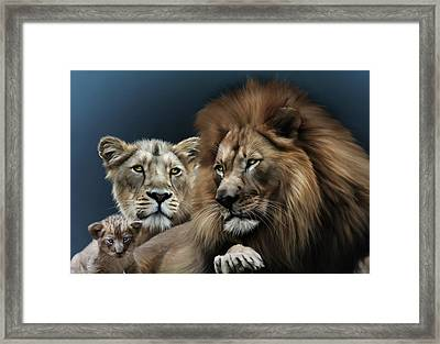 Lion Family Framed Print by Julie L Hoddinott