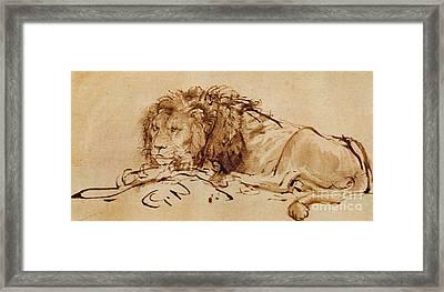 Lion Resting Framed Print by Rembrandt