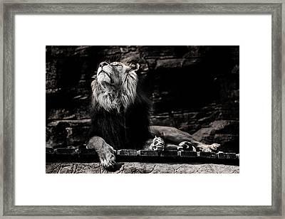Lion Rock Framed Print by Martin Newman