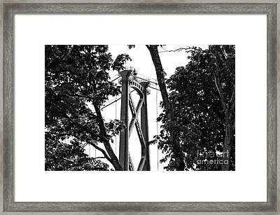Lions Gate Between The Trees Mono Framed Print by John Rizzuto