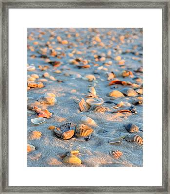 Litter On The Beach Framed Print by JC Findley
