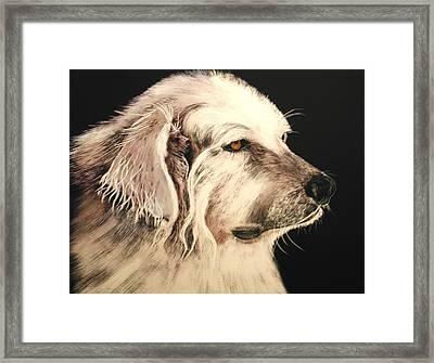 Little Bear Framed Print by Katherine McDermott