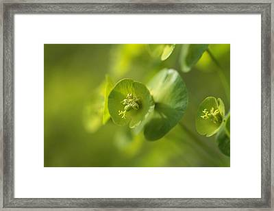 Green Power Framed Print by Connie Handscomb
