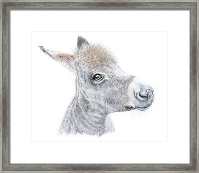 Little Donket II Framed Print by Sandra Moore