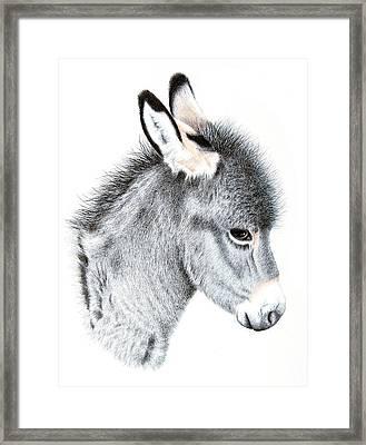 Little Donkey Framed Print by Sandra Moore