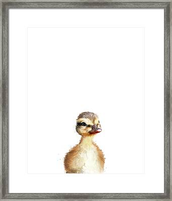 Little Duck Framed Print by Amy Hamilton