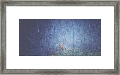 Little Fox In The Woods Framed Print by Carrie Ann Grippo-Pike