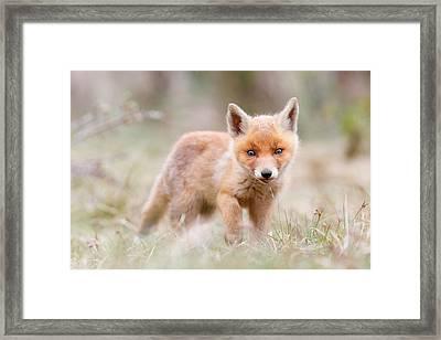 Little Fox Kit, Big World Framed Print by Roeselien Raimond