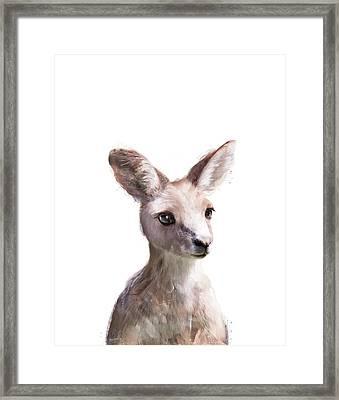 Little Kangaroo Framed Print by Amy Hamilton