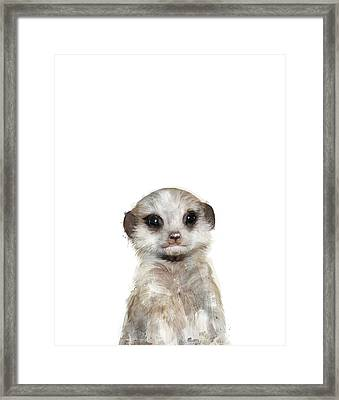 Little Meerkat Framed Print by Amy Hamilton