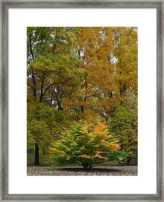 Little One Framed Print by Juergen Roth