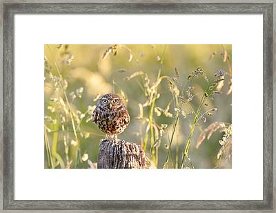 Little Owl Big World Framed Print by Roeselien Raimond