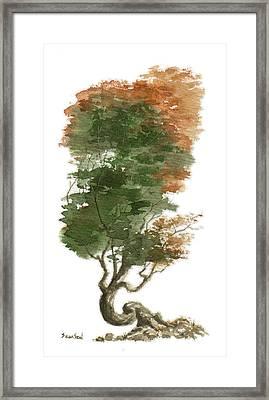 Little Tree 15 Framed Print by Sean Seal