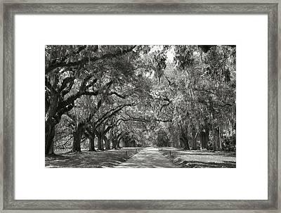 Live Oak Avenue Framed Print by Steven Ainsworth