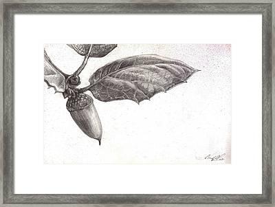 Live Oak Framed Print by Chad Glass