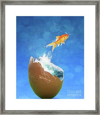 Live Your Dreams Framed Print by Juli Scalzi