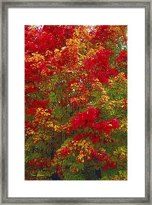 Living Color Framed Print by Bruce Thompson