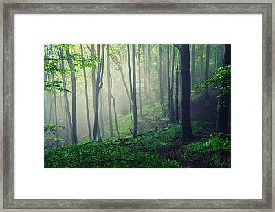 Living Forest Framed Print by Evgeni Dinev