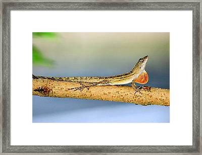 Lizard Looking For Love Framed Print by Kristin Elmquist