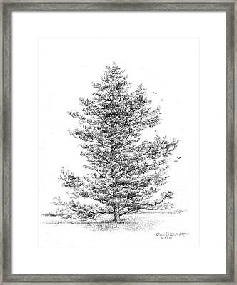 Loblolly Pine Framed Print by Jim Hubbard