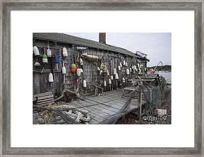 Lobster Shack Framed Print by Timothy Johnson