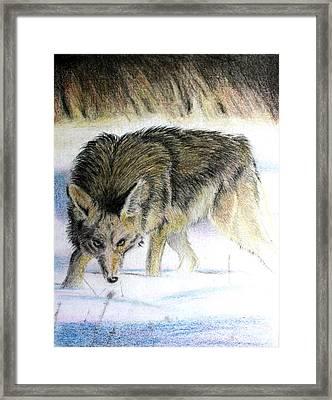 Logan Framed Print by Ted Castor