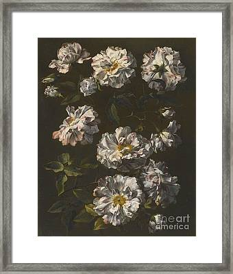 London A Study Of Striped White Gallica Roses Framed Print by MotionAge Designs