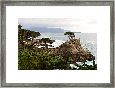 Lone Cypress Large Framed Print by Barbara Snyder