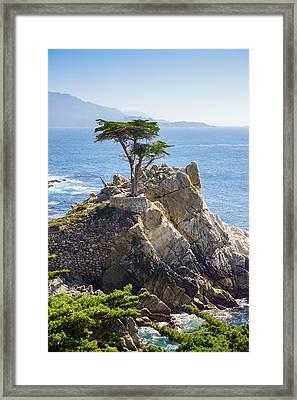 Lone Cypress Pebble Beach Framed Print by Lutz Baar