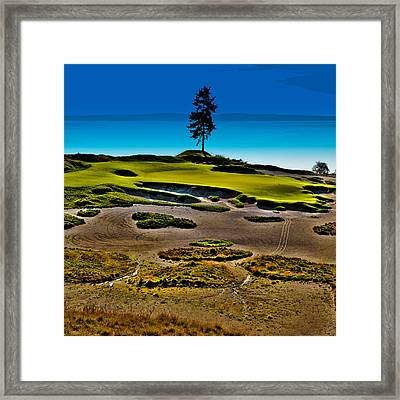 Lone Fir - Hole #15 At Chambers Bay Framed Print by David Patterson