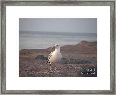 Lone Gull Framed Print by  Newwwman