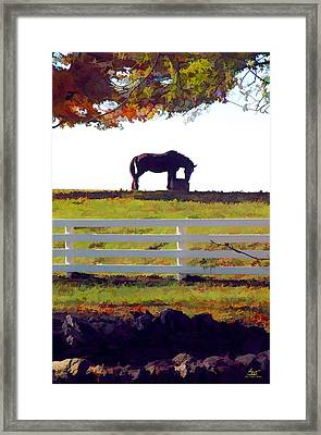Equine Solitude Framed Print by Sam Davis Johnson