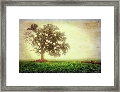Lone Oak Tree In Fog Framed Print by Jennifer Rondinelli Reilly