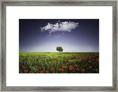 Lone Tree A Poppies Field Framed Print by Bess Hamiti