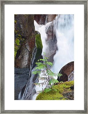 Lone Tree At Avalanche Creek Framed Print by Bruce Gourley