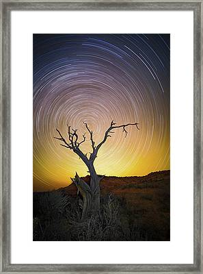 Lone Tree Framed Print by Edgars Erglis