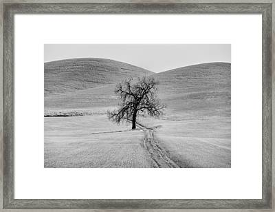 Lone Tree In The Palouse Framed Print by Jon Glaser