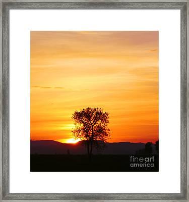 Lone Tree Sunset Framed Print by Nick Gustafson