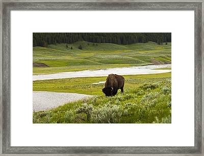 Lonely Bison Valley Framed Print by Chad Davis