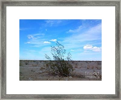 Lonely Bush Framed Print by Ashton Aguilar