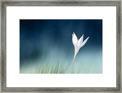 Lonely Framed Print by Doris Reindl