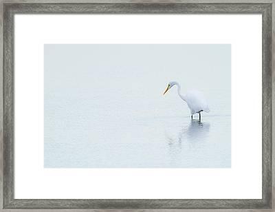 Lonely Egret Framed Print by Karol Livote